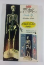 Vintage Models Kits 1959 Renwal Human Skeleton Assembly Kit NIB MINT COND. LOT#3