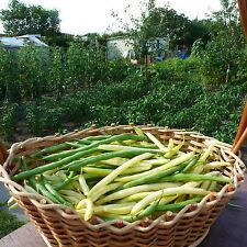 Verdi e fagioli GIALLA 15 + 15 semi Fagioli Cespuglio