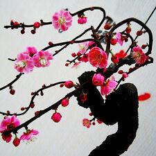 10pcs RED PRUNUS ( prunus mume ) Bonsai Seeds Cherry Seeds Home Garden