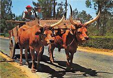 BR8446 Minho chariot de boeufs  portugal