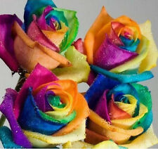 200pcs Colorful Rainbow Rose Flower Seeds Garden Plants Seeds Flower Seeds L7S