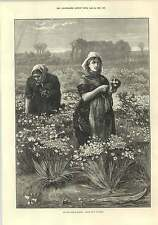 1875 Picking Flowers For The London Market Drawn By F Buckman