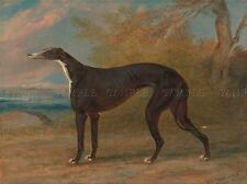 Pintura Animal Sport Garrard George Fox Greyhound Juno Art Print lah466a