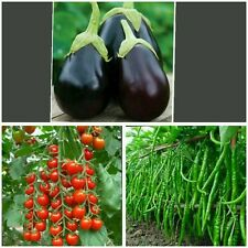 3 in 1 VEGETABLE Seeds - three Different Vegetable Seeds Combo Pack