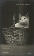 Kitty Cat in Basket LET'S GO TO MARKET c1905 Rotograph Real Photo Postcard