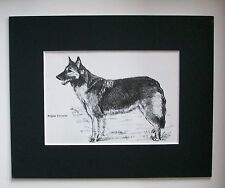 Belgian Shepherd Tervuren Dog Print Gladys Emerson Cook Bookplate 1962 Matted