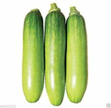 "20 Korean Summer Squash Seeds ""Meot Jaeng I Ae"", - similar to zucchini squash"