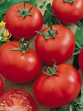"Seeds ""Siberian precocious"" tomato (10 seeds) Lot of 1 pcs"
