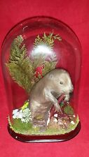 *Antique Victorian Inspired Taxidermy Baby Beaver Oval Dome Display//mouse-rat