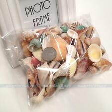 Nautical Decor Beach Mixed Natural Shell And Conch Home Party Table Decor
