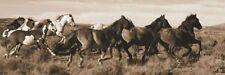 HORSE ART PRINT Wild Horses Claude Steelman