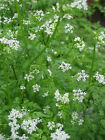 10 Herb medicinal collection patio inc valerian,calendula,cumin,chamomile,yarrow
