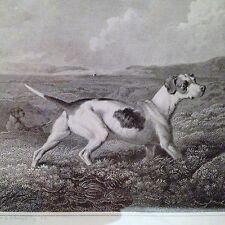 Antiguo Impresiones De Perros Deportivos X 4, Philip Reinagle artista, John Scott Grabador