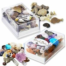 Fossil Box & Rock Box fab nature gift - inc ammonite shark tooth and gem stones