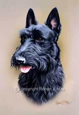Scottish Terrier Head Study Print by Robert J. May