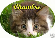 PLAQUE DE PORTE OVALE RIGIDE CHAT CHATON REF115 personnalisée  prénom CHAMBRE