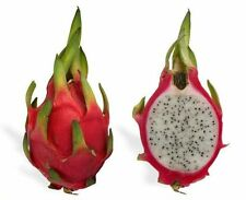 Fruit Seeds - 5 WHITE DRAGON FRUIT CACTUS Pitaya Seeds