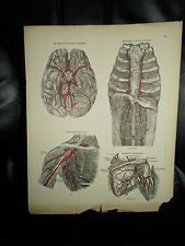 ARTERIES+VEINS+LYMPHATICS #61 Old Print From Descriptive Atlas of Anatomy 1880