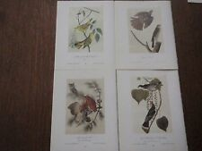 Lot of 40 Vintage Audubon Bird Prints - Warblers, Sparrows, Owls, Hawks, etc