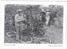 """Postcard-""""Picking Crew"""" -1972- ..The Fresh Grapes- *Temecula Wine Country (#172)"""