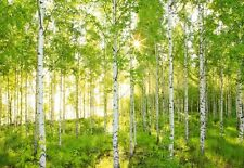 Wall Mural photo Wallpaper SUNNY forest scene Green & white Birch Trees wall art