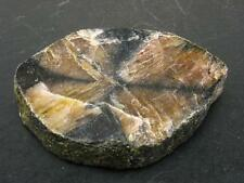 """CHIASTOLITE (VARIETY OF ANDALUSITE) CRYSTAL FROM CHINA - 1.7"""""""