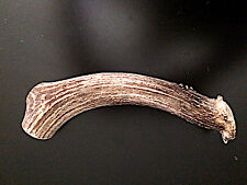Extra Large whole deer antler dog chew/ toy! Awesome Price!!,
