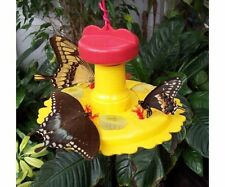 Songbird Essentials SE78200 6 oz. Butterfly Feeder