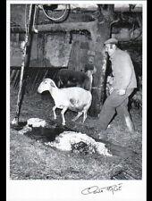 MAYRINHAGUES (12) Jean DOURNES ELEVEUR de MOUTONS à la TONTE 1989 / FAGE 89.200