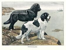 AWESOME VINTAGE ANTIQUE NEWFOUNDLAND LANDSEER DOGS DOG 1919 RARE Art Print