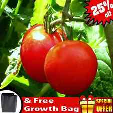 High Quality Natural Tomato Seeds - 100 seeds approximatelly