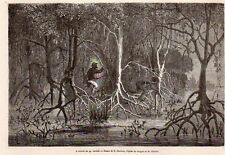 A TRAVERS LES PALETUVIERS MANGROVES CALEDONIE NEW CALEDONIA IMAGE 1868 PRINT