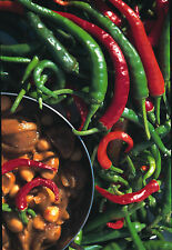 Hot Pepper - Cayenne / Chilli - Appx 50 seeds - Vegetables / Fruits