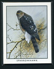 BRITISH BIRDS OF PREY  Collectors Cards - Sparrowhawk Hobby Falcon Merlin images