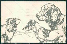Hunting dog Setter postcard cartolina QT5965