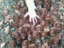 10 Super Cedar roses cedar rose pine cone Wood Wooden Rose Natural For Crafts