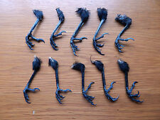 10  Dry Jackdaw / Magpie Feet  Taxidermy  Pagan  Arts & Crafts  Wierd