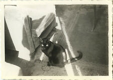 PHOTO ANCIENNE - VINTAGE SNAPSHOT - ANIMAL CHAT NOIR LUMIÈRE  - BLACK CAT LIGHT