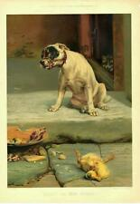 Guilty, or Not Guilty  -  Dog and Cat  --  by W. H. Trood   -  1894