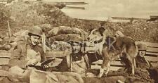 British Army Soldiers & Dispatch Dog, Trench World War 1 7x4 Inch Reprint Photo