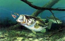 """Randy McGovern """"Unhappy Campers"""" Bass Fishing Print 21.25"""" x 15.25"""""""