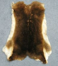 REX RABBIT PELT Natural Castor