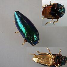 Rareza para los insectos-joyas coleccionista: verdadera chicharra (42318)