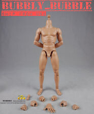1/6 COOMODEL COO Muscular Standard Male Body BD003 Ver 2.0 For Hot Toys  USA