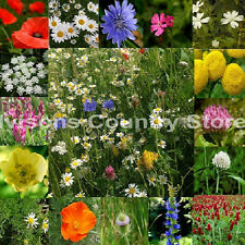 250g Ivisons Pure Meadow 100% wild flower seeds Bee Butterfly NO GRASS mix 06
