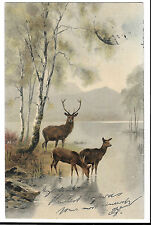 Stag & Deer at Waters edge PPC, Mannheim 1904 PMK, Undivided Back