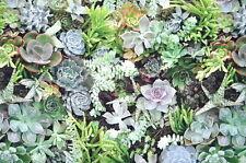 Deko Möbel Patchwork Stoffe Baumwolle Vorhang Gardine Grüne Pflanzen 1324/25