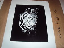 "Martha Spurlock art print "" Zebra "" Texas Artist print of a pen & ink drawing"