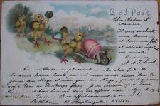 1902 Color Litho Swedish Easter Postcard: Dressed/Anthropomorphic Chicks- Sweden