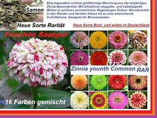 32x Zinnia youth and age Garden Seeds Flowers Seed Rare Plant Rare #154